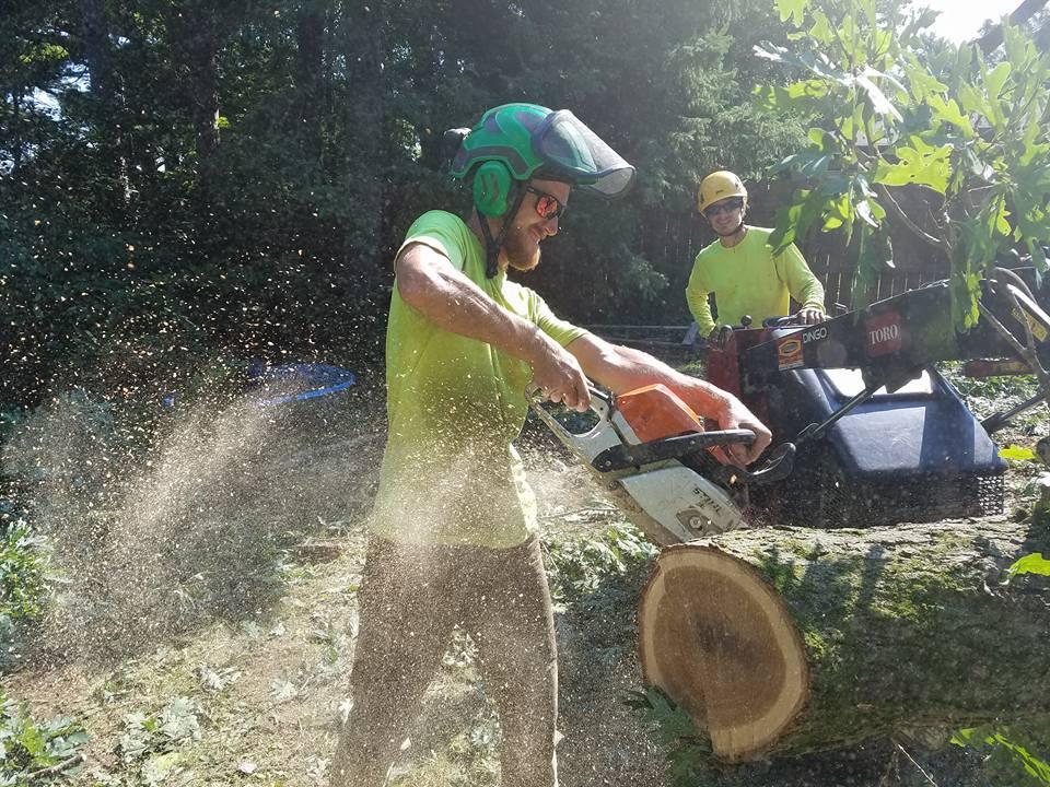 Tree crew using chainsaw to cut log